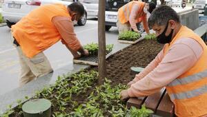 Büyükşehir Güllük Caddesini 40 bin çiçekle süsleyecek