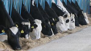 Mart ayında toplanan inek sütü miktarı yüzde 4,7 arttı