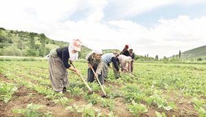 Çiftçiye tedarik desteği