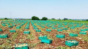 Kartallıoğlu: Çiftçilerle sözleşmeli çalışma modeli uyguluyoruz