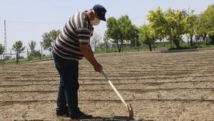 Yerel tohumdan market rafına