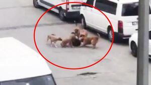 Sultangazide işe giden kadın başıboş köpeklerin saldırısına uğradı