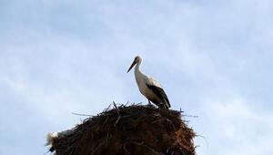 Kuş gözleminde Burdur ve Antalya ilk 10da