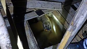 Asansör boşluğuna düşen köpeği itfaiye kurtardı