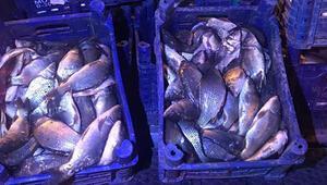 Elazığda kaçak olarak avlanan 600 kilogram balık ele geçirildi