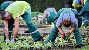 Çalışkan, gönüllü, acemi çiftçiler aranıyor