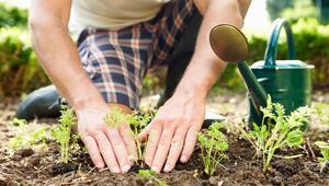 Amatör bahçıvanlara çevrim içi rehber
