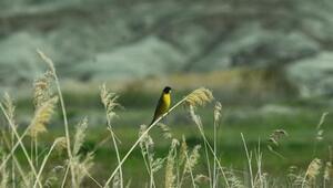 Vekilin objektifinden Kuş Cenneti'nin sakinleri
