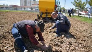 Kayseride boş araziye patates tohumu ekildi
