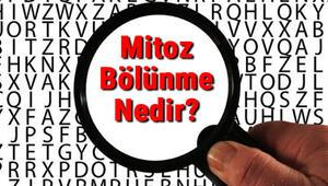 Mitoz Bölünme Nedir Mitoz Bölünme Evreleri Ve Özellikleri