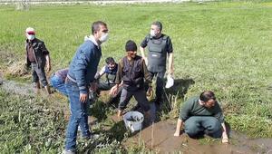 Kanalda susuz kalan 3 ton inci kefali, Tarım ve Orman Müdürlüğü ekiplerince kurtarıldı