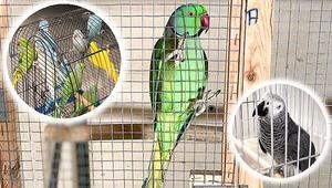 Papağan operasyonu