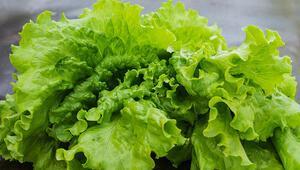Evde yetiştirilebilecek sebzeler arasında en iyi 10u seçiyoruz