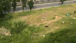 Sultangazide polisi gören çocukların kaçışması kamerada