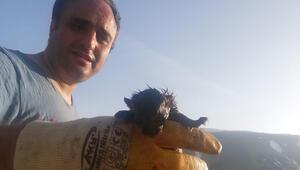 Yeni doğmuş bir Anadolu Vaşağı otomobilin motor kısmında bulundu