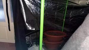 Eve kurdukları çadırda uyuşturucu yetiştiren 3 kişi yakalandı