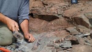 Arjantinde 10 metrelik dev dinozor fosili bulundu