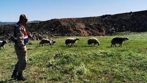Elazığda kayıp koyunlar 9 saat sonra bulundu