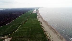 Mersin'de 2,5 milyon metrekarelik alan koruma altında