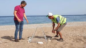 Antalyada bu yılın ilk caretta yuvaları