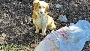 Diyarbakırda ağzı bağlı çuvala konulan köpek, ölüme terk edildi