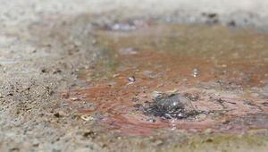 Denizlide termal su asfaltı deldi