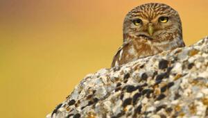 Hayvanların inanılmaz özellikleri: Şaşıracaksınız...
