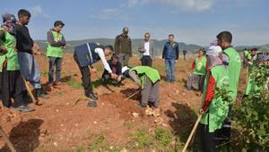 Mersinde tahrip edilen ormanlık alan İdlib Şehitleri Hatıra Ormanı oldu