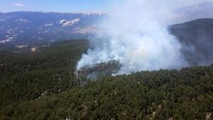 Demredeki yangında, 100 dönüm orman alanı kül oldu