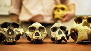 Milyarlarca yıllık evrim tarihi neden tehdit altında