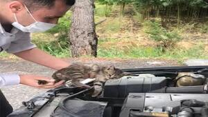 Motor kaputundaki yavru kedi, 70 km yolculuktan sonra fark edildi