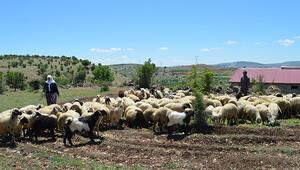 Elazığda göçebelerin zorlu yayla yolculuğu başladı