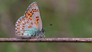 188 kelebek türünü 6 yılda fotoğraflayıp kitap haline getirdiler