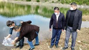 Orhanelide bin 200 sazan yavrusu gölete bırakıldı