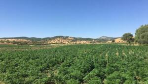 Diyarbakırda rekor uyuşturucu ele geçti
