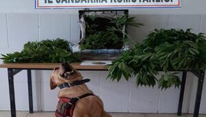 Çanakkalede Roketli uyuşturucu operasyonu: 2 gözaltı