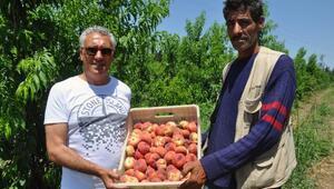 Amik Ovasında üreticiler, çekirdekli meyvecilikte erkencilik avantajını kullanmak istiyor