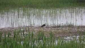 Beyşehir Gölünde su kuşları gün yüzüne çıktı