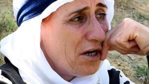 30 koyunu öldü, 18 kişilik ailemizin tek geçim kaynağıydı diyerek ağladı