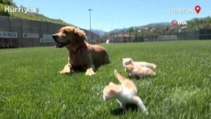 Mia isimli köpek, öksüz kedi yavrularına anneleri gibi davranıyor