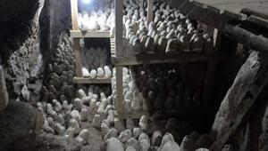 Rokfora rakip... Tam 45 ton mağarada saklanıyor