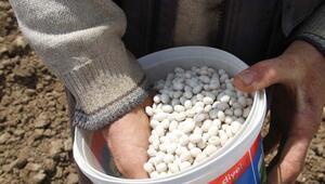 Asırlardır ata tohumlarıyla üretiliyor, lezzetiyle de dikkat çekiyor