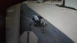 At arabalı hırsızlık şüphelisi kadın kamerada