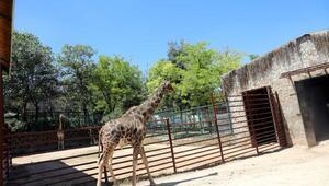 Gaziantep Hayvanat Bahçesi, ziyaretçilerini ağırlamaya başladı