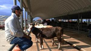 Edirnede canlı hayvan pazarı tedbirlerle açıldı