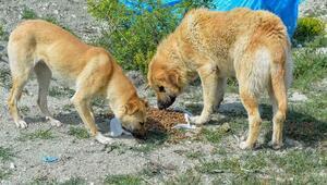 Başkentte sokak hayvanlarına 461 ton mama desteği sağlandı