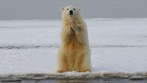 1 milyona yakın hayvan ve bitki türü yok olma riski taşıyor