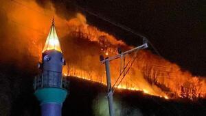 Karadenizde yanan 290 hektarlık orman arazisine dikilen fidanlar yeşerdi