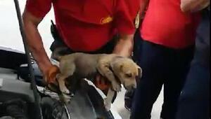 Otomobilin motor bölümünde sıkışan yavru köpeği itfaiye kurtardı