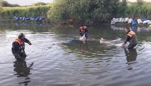 Vanda kaçak inci kefali avlayanlara 30 bin lira ceza uygulandı